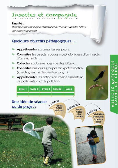 15 insectesetcompagnie